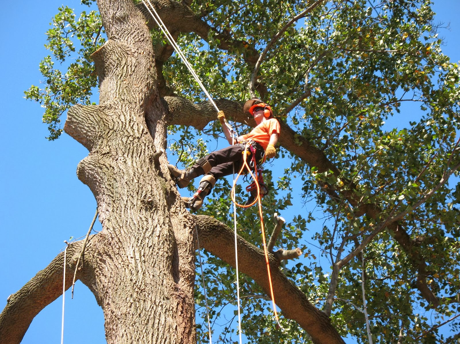 Cutting A Tree : Tree removal and lopping penrith sydney urban services